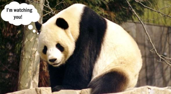 Panda watching SEO